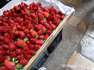 モロッコのイチゴの写真